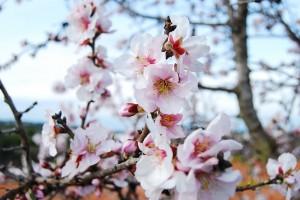 flower-169670_640