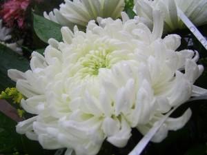 white-20323_640