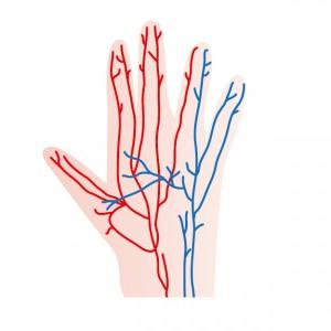爪のへこみと経絡